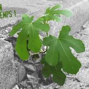 Le printemps du climat : les Jeunes Écologistes s'engagent partout en France !