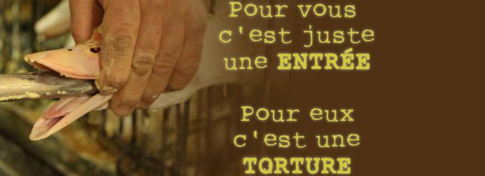 Contre la torture animale : interdisons le foie gras!